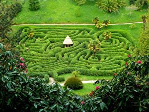 Фотография Англия Сады Кусты Дизайн Пальмы Glendurgan Gardens Природа
