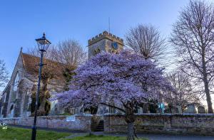 Фотография Англия Храмы Церковь Цветущие деревья Уличные фонари St.Paul Church Ringwood