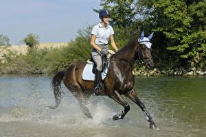 Картинка Конный спорт Лошади Воде Бегущая Брызги В шлеме Девушки