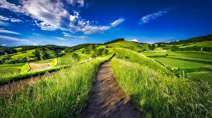 Фотография Поля Германия Пейзаж Небо Трава Тропинка Природа