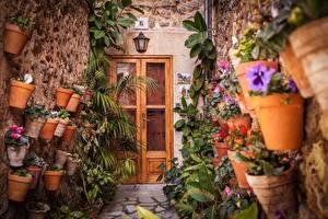 Картинки Цветочный горшок Дверь цветок