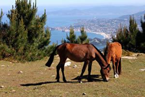 Картинки Лошади 2 Животные