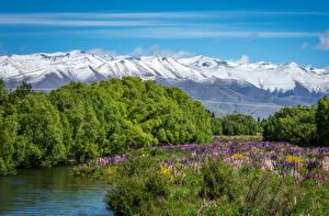 Картинки Новая Зеландия Речка Горы Люпин Пейзаж Twizel River MacKenzie Country Природа
