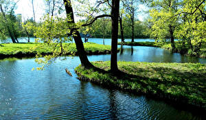 Обои Россия Санкт-Петербург Парки Пруд Весна Деревья Catherine Park Природа