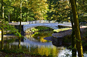 Картинки Шотландия Парки Пруд Мосты Ствол дерева Linn Park Glasgow Природа