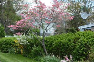 Фотографии Весенние Цветущие деревья Кусты Природа