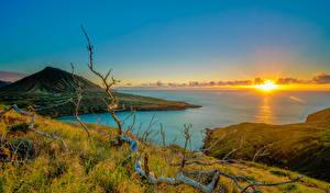 Картинки Рассветы и закаты Берег Пейзаж Гавайи Солнце Холмы Ветвь Трава