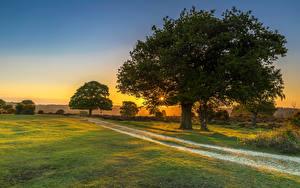 Фотография Рассветы и закаты Луга Дороги Деревья Лучи света