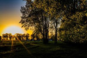 Обои Рассветы и закаты Деревья Трава Лучи света Солнце
