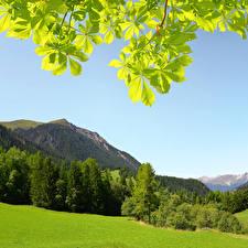 Фотография Швейцария Горы Леса Альпы Деревья