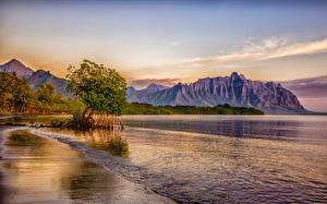 Фотографии Тропики Берег Горы Штаты Гавайи Деревья