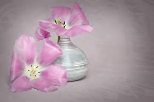 Картинки Тюльпан Цветной фон Вазе Два Цветы