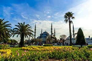 Картинка Турция Стамбул Храмы Парки Тюльпаны Голубая мечеть Пальмы