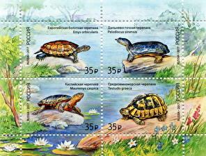 Фото Черепахи Почтовая марка Fauna of Russia