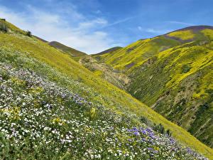 Фото Штаты Калифорния Холмы Мох Carrizo Plain Природа