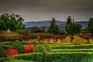 Обои США Сады Калифорния Кусты HDR
