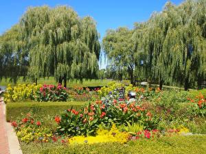 Обои Америка Парки Чикаго город Дерево Botanic Garden Природа
