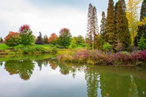 Картинки США Парки Пруд Чикаго город Дерево Кустов Botanic Garden Природа