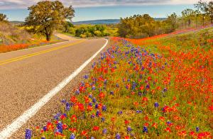 Фотография США Дороги Люпин Техас Природа