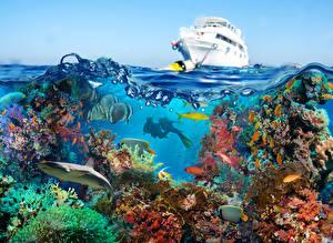 Картинки Подводный мир Кораллы Рыбы Яхта Дайвинг Животные