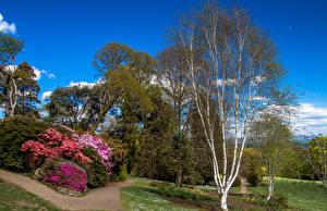 Обои Великобритания Парки Весенние Деревья Кусты Тропа Clyne Gardens Swansea
