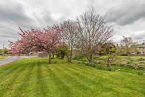 Фото Великобритания Весенние Цветущие деревья Парки Деревья Трава Yorkshire Dales National Park Природа