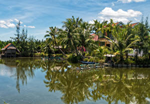 Фото Вьетнам Тропики Реки Пирсы Пальмы Hoi An Природа