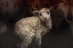 Картинки Волки Рисованные Овцы Детеныши Смотрит Животные