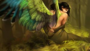 Фотография Ангелы Крылья Сзади Девушки