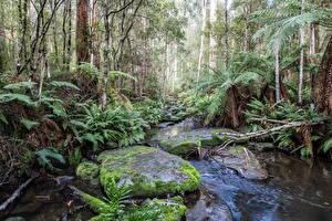 Фото Австралия Парки Камень Ручей Мох Деревья Great Otways National Park Природа