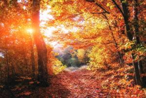 Обои Осень Леса Деревья Листья