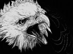 Фото Птицы Орлы Рисованные Голова Черно белое Черный фон Клюв животное