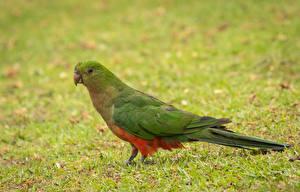 Картинка Птицы Попугаи Сбоку