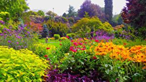 Картинки Канада Сады Ванкувер Кусты Деревья Queen Elizabeth Garden Природа