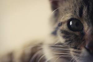 Картинка Кот Макросъёмка Глаза Вблизи Взгляд Животные