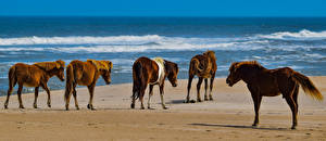 Фотография Побережье Лошади Животные