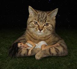 Фото Креатив Кошки Смешная Спит Траве Животные Девушки