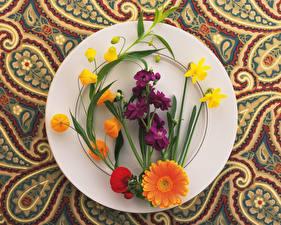 Фото Нарциссы Герберы Маттиола Тарелка Цветы
