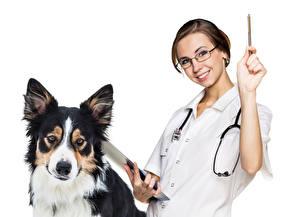 Обои Собаки Белый фон Шатенка Бордер-колли Очки Морда Улыбка vet Девушки Животные