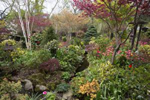 Картинка Англия Сады Весенние Кусты Деревья Walsall Garden