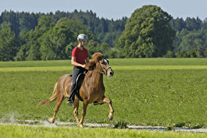Картинки Конный спорт Лошади Шлем спортивный Девушки