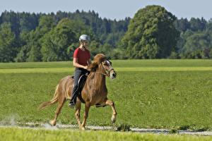 Картинки Верховая езда Лошади Шлем спортивный Девушки