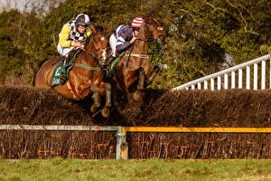 Фотографии Конный спорт Лошадь Мужчины 2 В прыжке Кустов Спорт