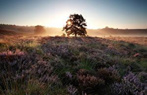 Фотография Поля Рассветы и закаты Лаванда Деревья Heather Flowers Природа