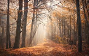 Картинки Леса Утро Осенние Деревья Туман Листва