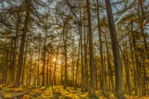 Фотография Леса Деревья Лучи света Ствол дерева