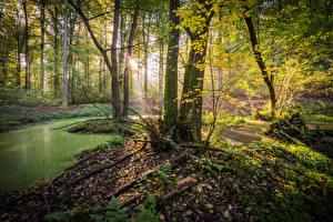 Фотографии Германия Леса Деревья Ручей Лучи света Olsberg Природа