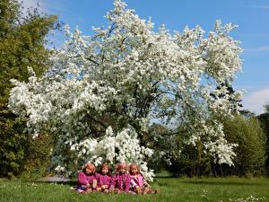 Картинки Германия Парки Весенние Цветущие деревья Кукла Девочки Трава Grugapark Essen Природа