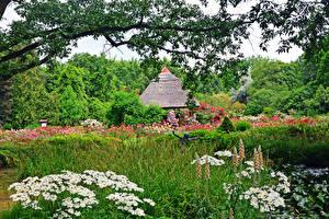 Картинка Венгрия Парки Ромашки Кусты Трава Botanical garden Szeged Природа
