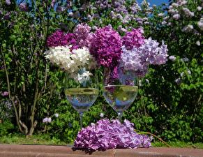 Картинка Сирень Бокалы 2 Цветы